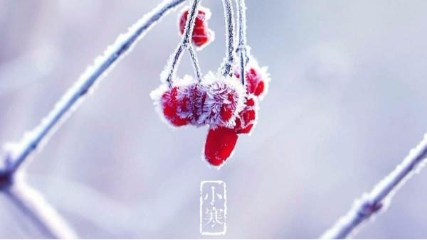 小寒时节不畏寒,吃货问候暖心间。